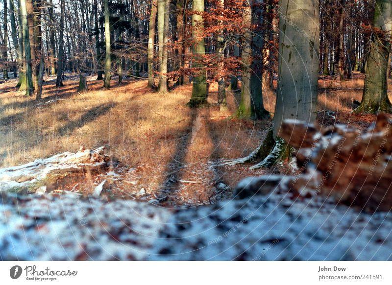 Wenn das Licht bricht Pflanze Baum Winter Landschaft Wald Wiese kalt Schnee Gras braun Eis Park Wachstum Sträucher Spaziergang Wandel & Veränderung