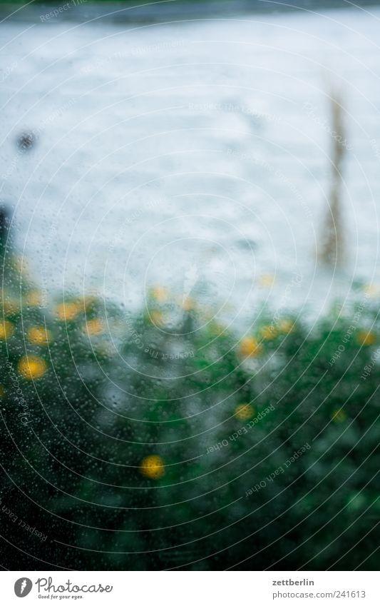 Sonnensturm im Regen Natur grün Pflanze Sommer Ferien & Urlaub & Reisen Blatt Haus Einsamkeit Wand Fenster Blüte Garten Mauer Wetter Umwelt