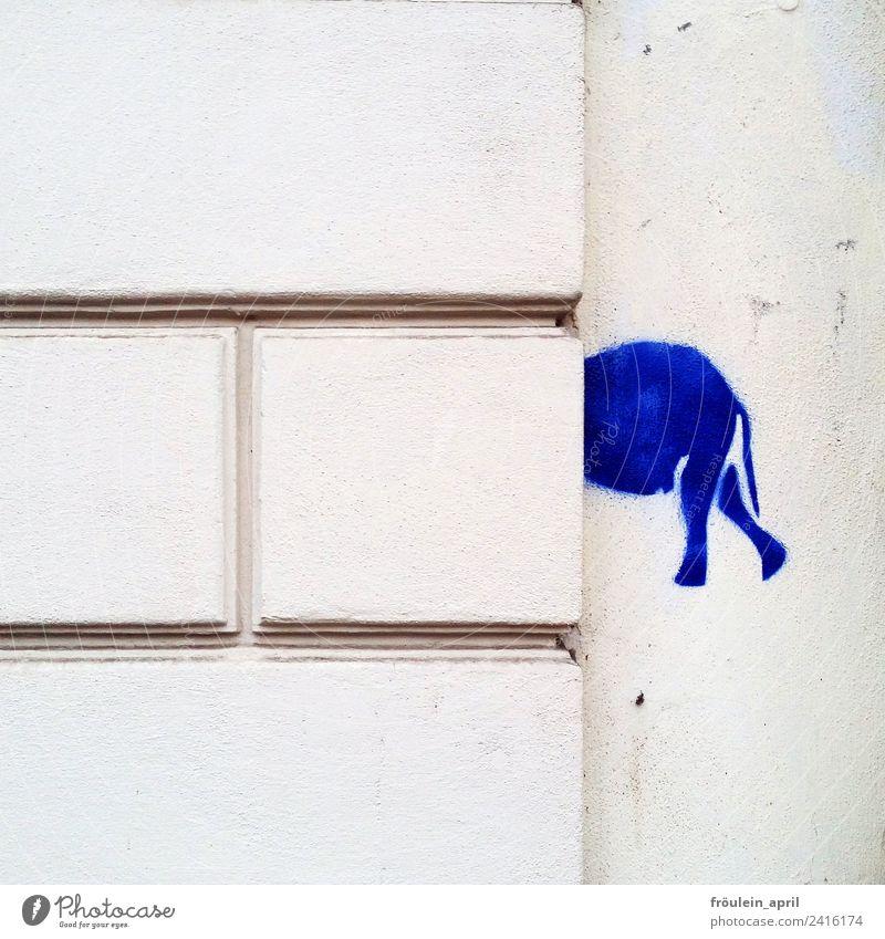 Wohin des Weges? Design Kunst Grafik u. Illustration Stencil Mauer Wand Elefant Stein Zeichen Graffiti Denken entdecken blau weiß Überraschung ästhetisch