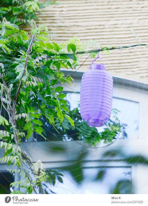 Lila Lampion Garten Dekoration & Verzierung Feste & Feiern Sommer Pflanze Sträucher Blatt leuchten violett Gartenfest Farbfoto Außenaufnahme Menschenleer