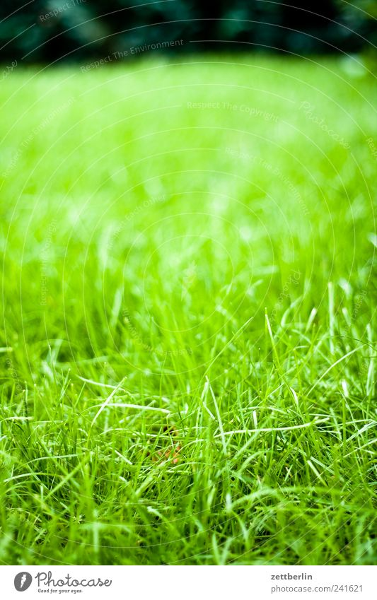 Rasen Natur grün Pflanze Sommer Blatt Wiese Blüte Gras Garten Park Landschaft Wetter Umwelt Wachstum Klima
