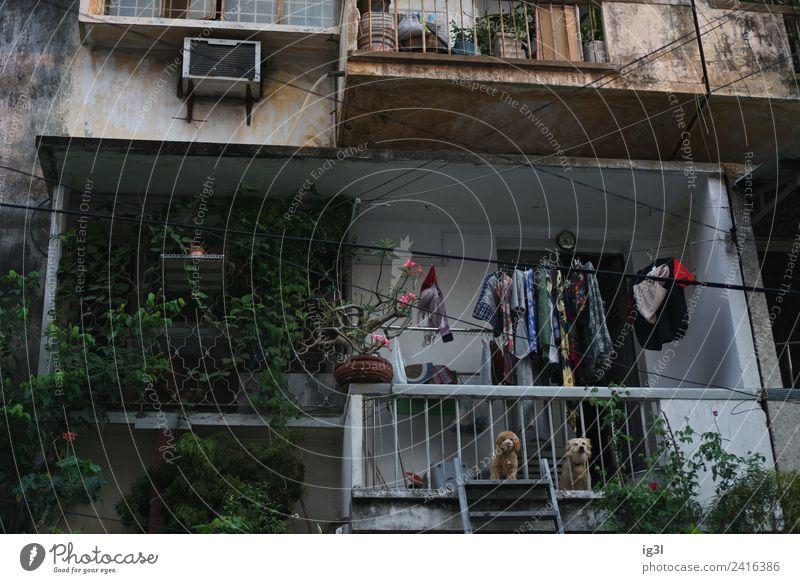 Wachhunde Hund Tier Häusliches Leben Wohnung Zufriedenheit Dekoration & Verzierung Armut bedrohlich Sicherheit Asien Umzug (Wohnungswechsel) Balkon Verfall
