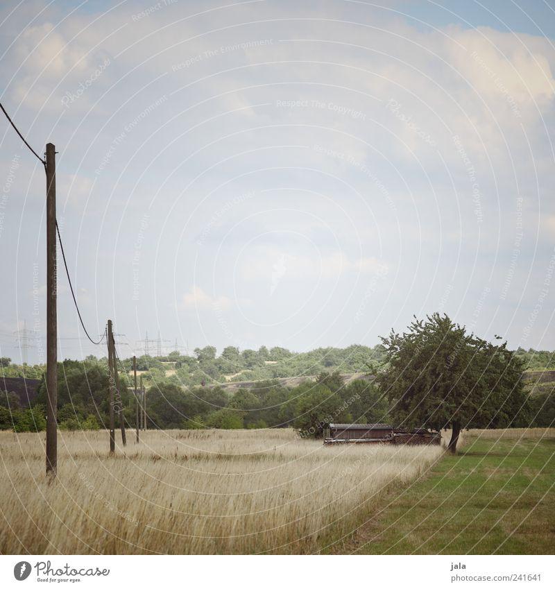 feld & flur Natur Landschaft Pflanze Himmel Wolkenloser Himmel Baum Gras Sträucher Grünpflanze Nutzpflanze Wildpflanze Wiese Feld Strommast Unendlichkeit blau