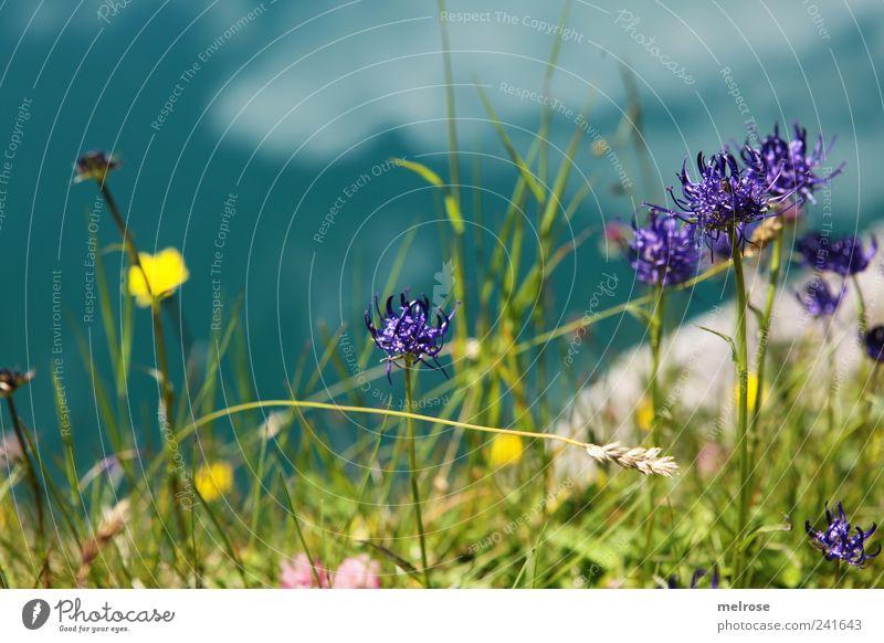 Am Seeufer III Natur Pflanze Wasser Himmel Wolken Sonnenlicht Sommer Gras Farn Grünpflanze Wildpflanze Alpen Berge u. Gebirge Lünersee Stausee Gebirgssee