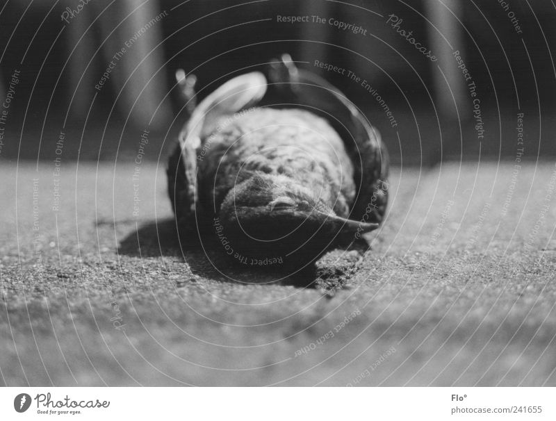 Tod im Stadtpark Natur schwarz Einsamkeit Tier dunkel grau Vogel Umwelt Vergänglichkeit Wildtier Amsel Totes Tier