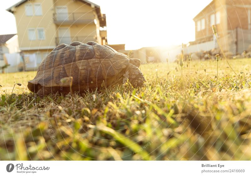 Aufbruchsstimmung Sommer Garten Natur Sonnenaufgang Sonnenuntergang Sonnenlicht Wärme Wiese Tier Schildkröte 1 Bewegung laufen Unendlichkeit Optimismus Mut
