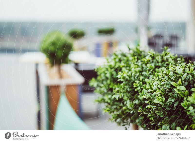 Bepflanzung auf der Terrasse Natur Pflanze Stadt Dekoration & Verzierung ästhetisch Sträucher Geländer Balkon Restaurant Café Grünpflanze Pflanzenteile