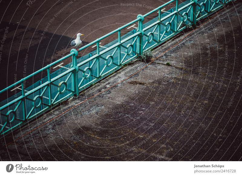 Möwe auf Geländer Tier Vogel 1 ruhig Brighton Möwenvögel graphisch England Promenade Küste Neigung minimalistisch sitzen warten geduldig Textfreiraum dunkel