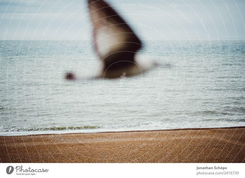 Möwe vor Meer Himmel Landschaft Tier Strand Hintergrundbild kalt außergewöhnlich Vogel fliegen Horizont Wetter Wind Gelassenheit nah
