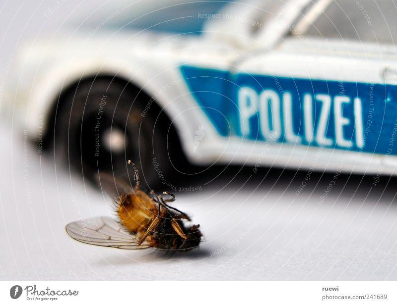 Crime scene blau weiß Tier schwarz Tod PKW Fliege liegen Suche kaputt Flügel Gewalt Hilferuf Flucht Fußgänger Polizei