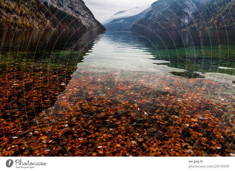 Laubfall Ferien & Urlaub & Reisen Ausflug Ferne Berge u. Gebirge Natur Landschaft Herbst Alpen See Königssee St. Bartholomä Berchtesgaden Deutschland Bayern
