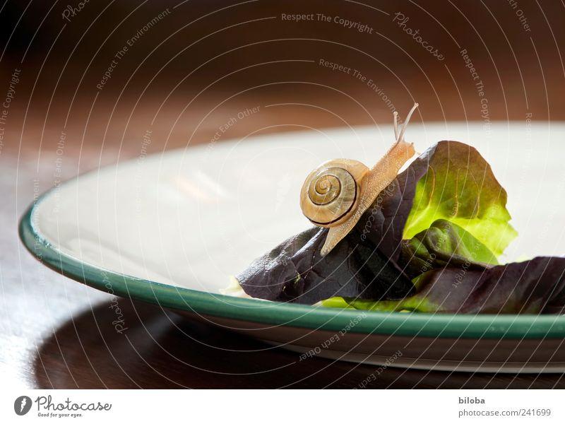 Gipfelstürmer Lebensmittel Salat Salatbeilage Ernährung Bioprodukte Teller Tier Wildtier Schnecke 1 braun grün weiß Tellerrand Schneckenhaus aufstrebend