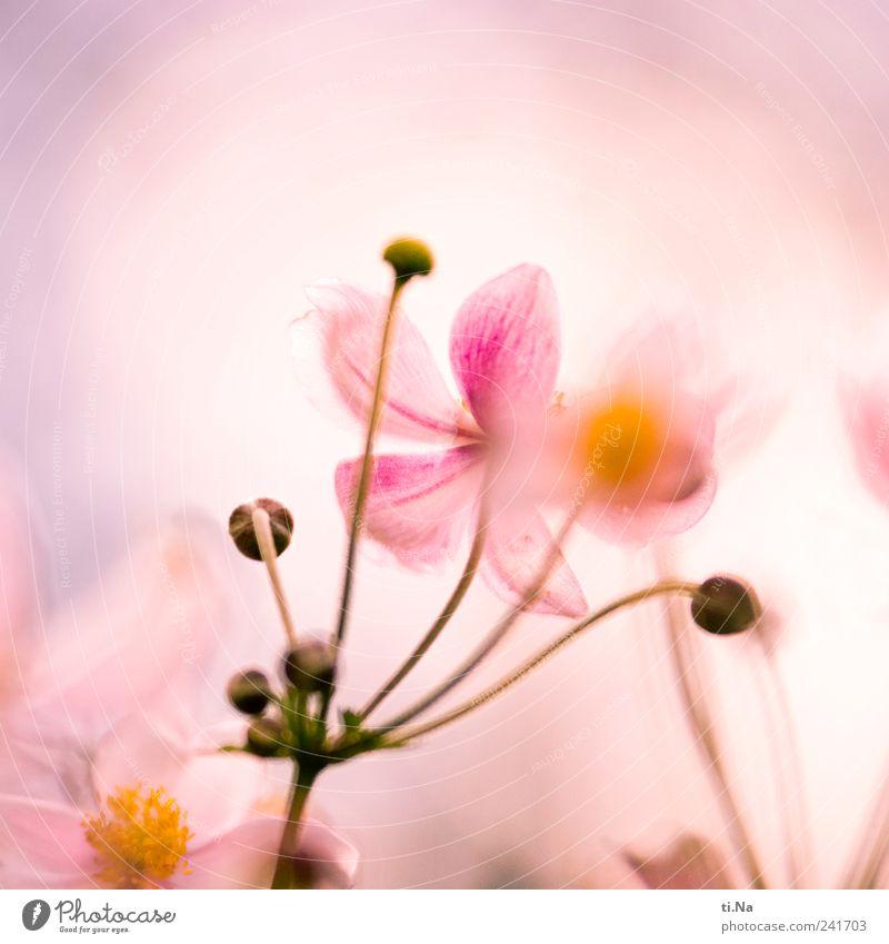 Sommersüchtig Pflanze Blume Sträucher Blatt Blüte Wildpflanze Blühend Duft Wachstum hell schön blau gelb violett rosa Frühlingsgefühle Romantik Farbfoto