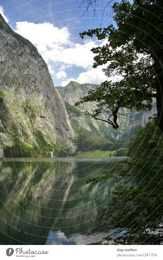 Urzeit am Königssee Natur Wasser Himmel weiß Baum grün blau Pflanze Sommer schwarz Wolken gelb Wald Gras Berge u. Gebirge Landschaft