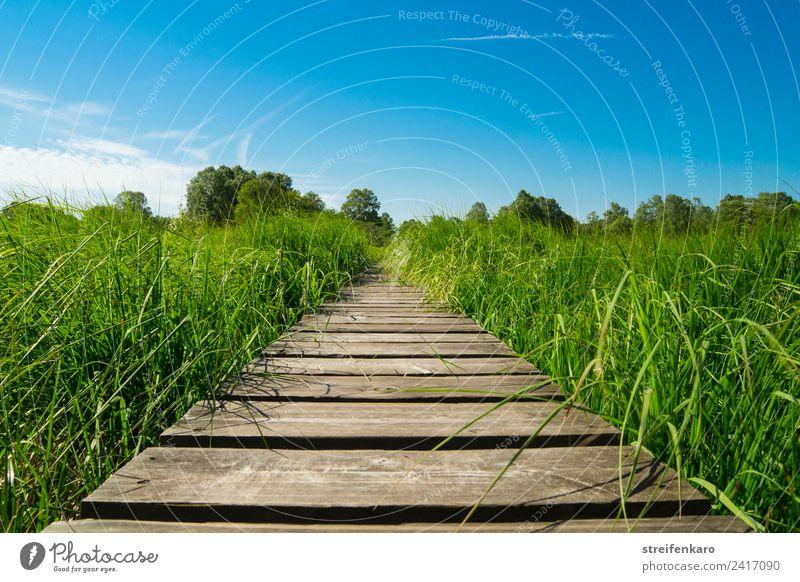 Vorwärts! harmonisch Zufriedenheit Erholung ruhig Meditation Sommer wandern Umwelt Natur Landschaft Pflanze Himmel Frühling Gras Moor Sumpf Wege & Pfade Holz