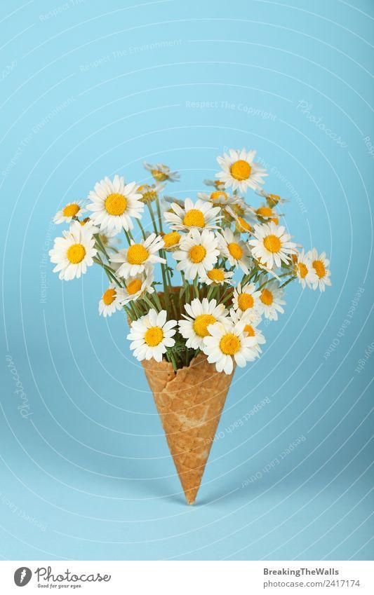 Natur blau Pflanze Farbe schön weiß gelb Frühling Liebe Blüte lustig natürlich klein modern ästhetisch frisch