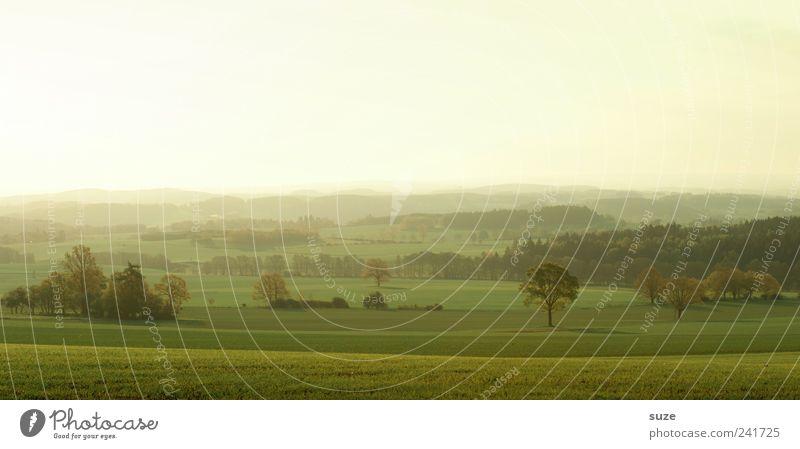 Vogtland am Morgen Ferne Umwelt Natur Landschaft Himmel Wolkenloser Himmel Horizont Sommer Klima Schönes Wetter Baum Wiese Feld authentisch fantastisch hell
