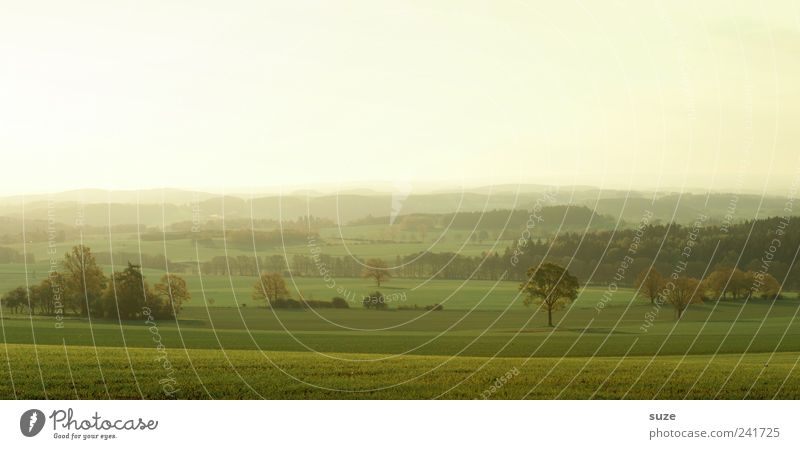 Vogtland am Morgen Himmel Natur grün Sommer Baum Landschaft Ferne Umwelt Wiese hell Stimmung Horizont Feld Idylle Zufriedenheit authentisch