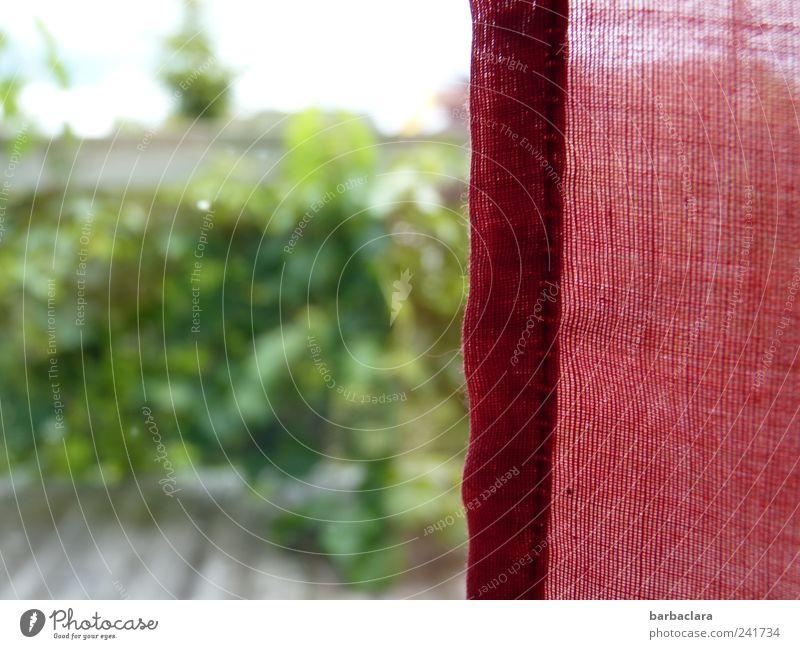 Eine unerwartete Sehnsucht Natur grün rot Pflanze Sommer Einsamkeit Leben Fenster Bewegung Garten Glück träumen hell Stimmung Zufriedenheit natürlich