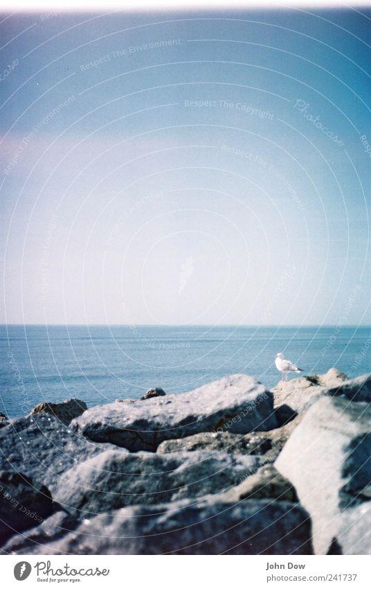spot the bird! Meer Strand Ferien & Urlaub & Reisen Tier Ferne Freiheit Vogel Küste Horizont Felsen Aussicht Unendlichkeit Sehnsucht analog Bucht Möwe