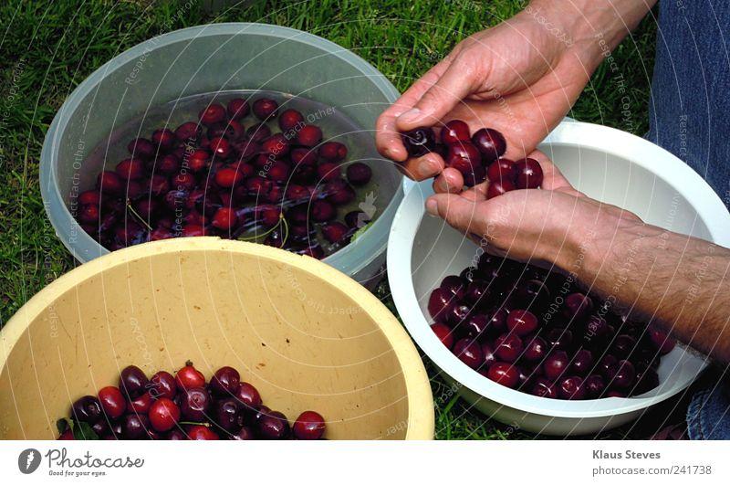 Auslese Mensch Natur rot Pflanze schwarz Garten Arme Haut maskulin rennen Finger beobachten wählen Vorfreude Begeisterung gebrauchen