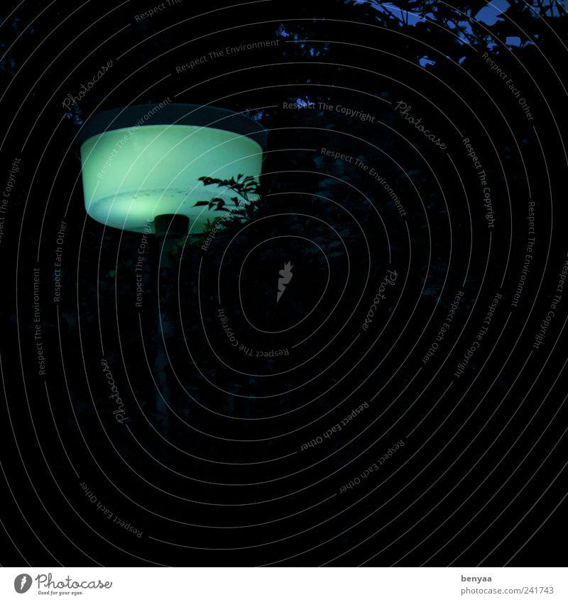 Liebe Laterne Straßenbeleuchtung Lampion leuchten dunkel gruselig kalt Licht grün Nacht Abend Farbfoto Außenaufnahme Menschenleer Textfreiraum rechts Dämmerung