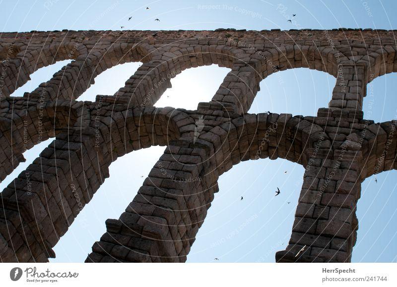 Aquäduktschwalben I blau grau Stein Vogel fliegen Wahrzeichen Spanien Sehenswürdigkeit Torbogen Schwarm Schwalben Segovia