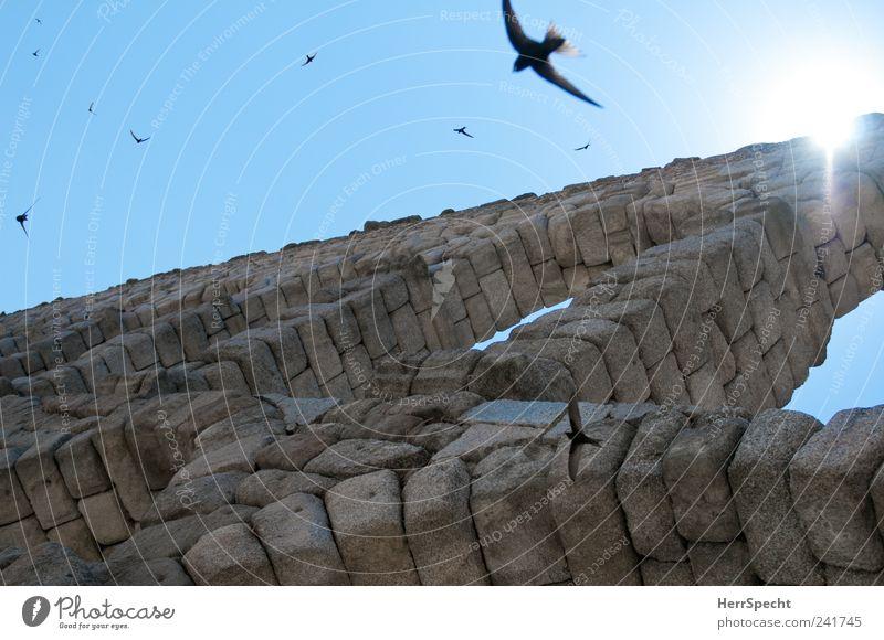 Aquäduktschwalben II Segovia Spanien Altstadt Sehenswürdigkeit Wahrzeichen Vogel Schwalben Schwarm Stein blau grau Torbogen fliegen Sommer Nisten Brutpflege