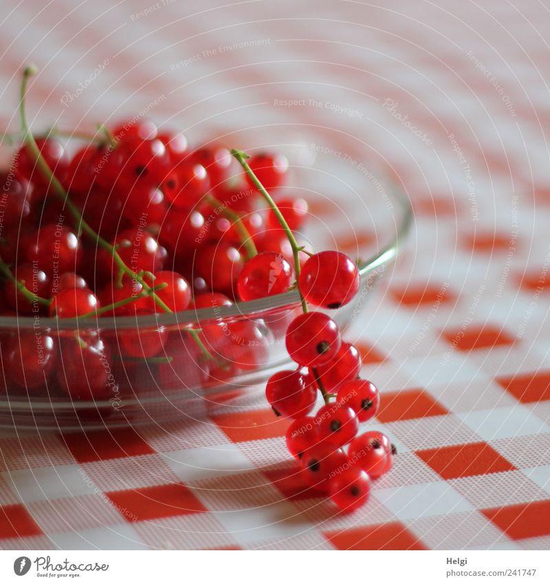 frisch gepflückte rote Johannisbeeren liegen in einer Glasschale auf einer rot-weiß-karierten Tischdecke Lebensmittel Frucht Ernährung Bioprodukte
