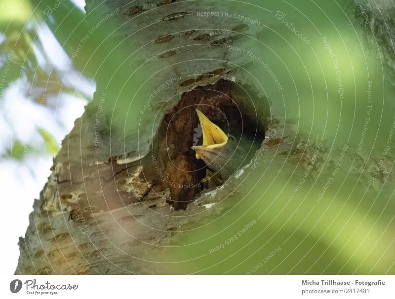 Hungriger Vogelnachwuchs Natur grün Sonne Baum Tier Blatt Tierjunges gelb Umwelt orange Park Wildtier Kommunizieren Kindheit Schönes Wetter