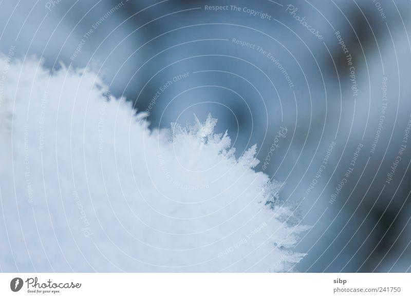 Einzigartig weiß Winter kalt Schnee Eis Frost einzigartig zerbrechlich Eiskristall sensibel filigran Schneedecke