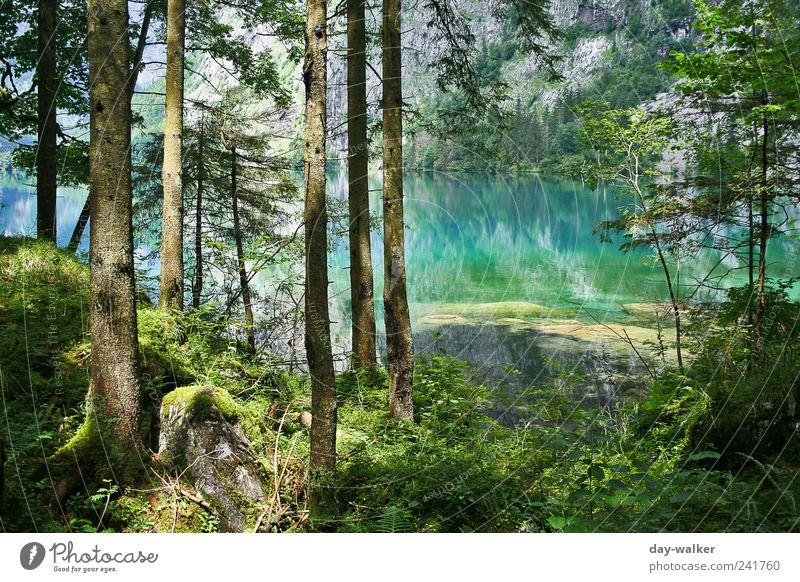Grünblaues Farbenspiel Natur Wasser Baum grün blau Pflanze Sommer Blatt Wald Gras Berge u. Gebirge Landschaft braun Felsen Erde Sträucher