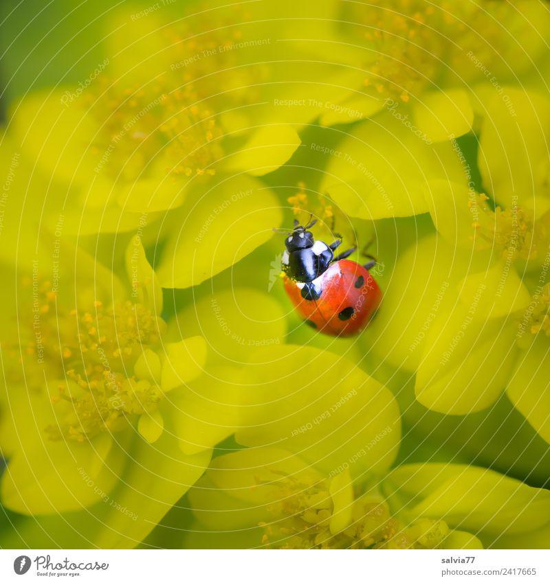 Farbtupfer Natur Sommer Pflanze Blume ruhig gelb Blüte Wege & Pfade Glück klein Garten orange Zufriedenheit Geburtstag Lebensfreude Wohlgefühl