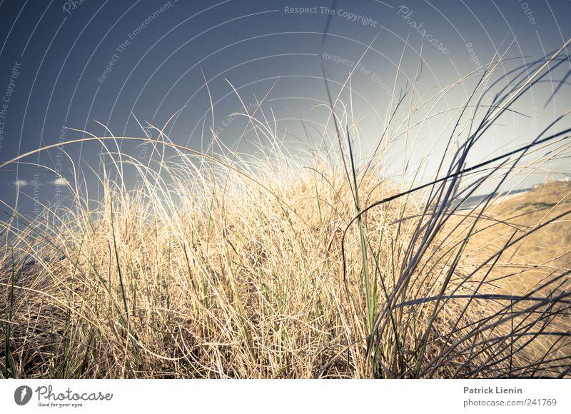 Dünenwind Himmel Natur Pflanze Sommer Ferien & Urlaub & Reisen Strand Meer Ferne Freiheit Umwelt Landschaft Küste Luft Wetter Freizeit & Hobby Ausflug