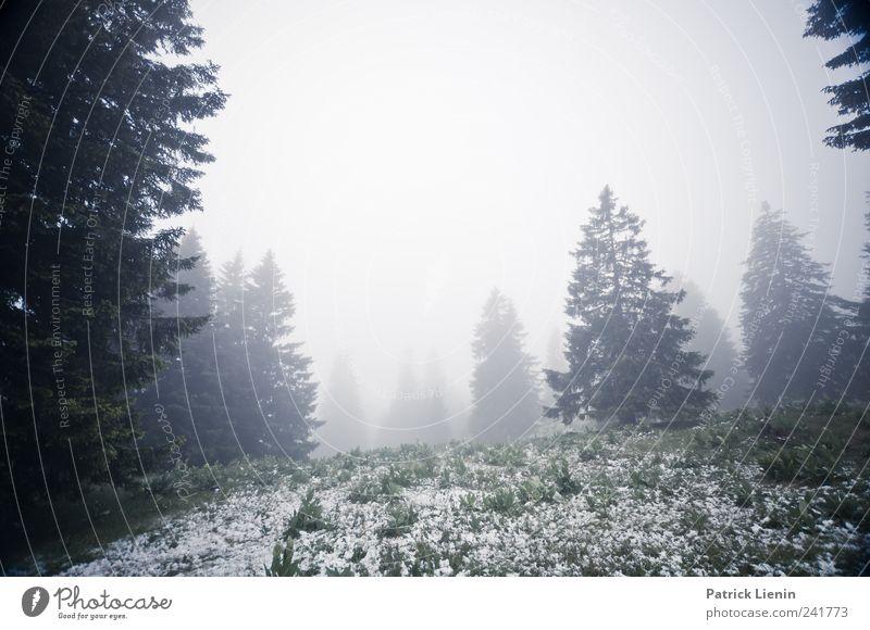 Good morning Natur grün Baum Pflanze rot Ferien & Urlaub & Reisen Wolken Einsamkeit Wald kalt Schnee Berge u. Gebirge Landschaft Umwelt grau Wetter