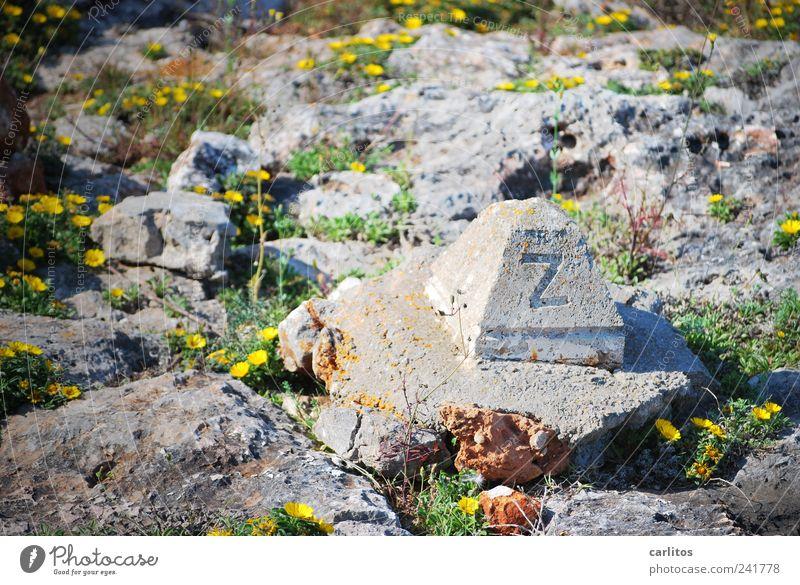 zett grün Pflanze Sommer gelb Blüte grau Stein Wärme Beton Schilder & Markierungen Felsen Blühend Grenze Denkmal trocken Schönes Wetter