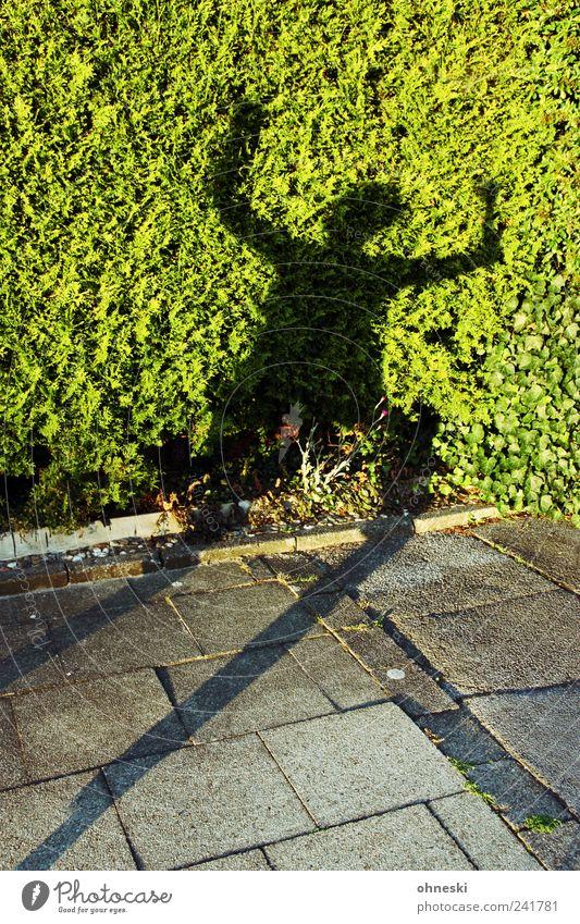 Keine Suppe Mensch 1 Sommer Pflanze Hecke Fußgänger Bürgersteig verrückt grün Begeisterung Euphorie Surrealismus Silhouette Tanzen Jubelstimmung Freude Farbfoto