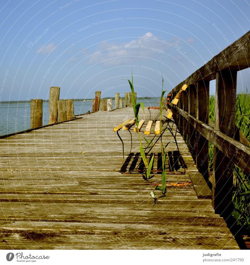 Platz am Bodden Umwelt Natur Landschaft Pflanze Himmel Sommer Küste Seeufer Vorpommersche Boddenlandschaft Holz natürlich Stimmung Erholung Idylle ruhig Steg