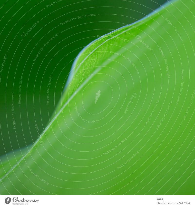 Kein Blattsalat 1 Natur Sommer Pflanze grün Umwelt Frühling natürlich Wachstum ästhetisch frisch authentisch einfach rund positiv Optimismus