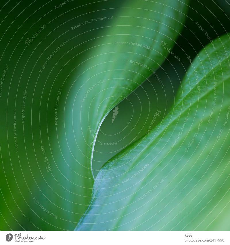 Kein Blattsalat 4 Natur Sommer Pflanze grün schwarz Frühling natürlich feminin Linie Wachstum ästhetisch authentisch einfach berühren geheimnisvoll