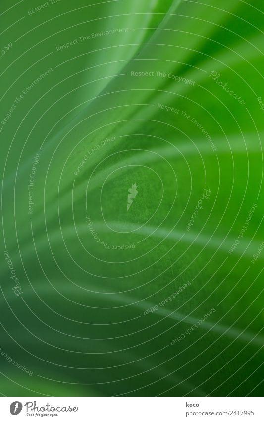 Kein Blattsalat 2 Natur Sommer Pflanze grün Frühling Wege & Pfade Linie Wachstum ästhetisch authentisch Erfolg Energie einfach berühren Streifen