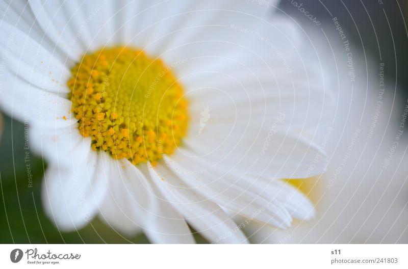 Guten Morgen! Natur weiß schön Pflanze Blume gelb Garten Blüte Park hell natürlich ästhetisch leuchten nah Freundlichkeit Blühend