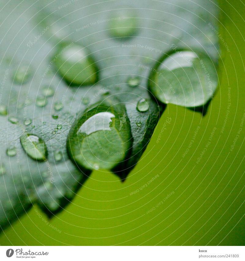 Wassertropfen Stil schön Leben harmonisch Erholung Spa Natur Frühling Sommer Blatt Tropfen berühren träumen Traurigkeit Flüssigkeit nass rund saftig Sauberkeit