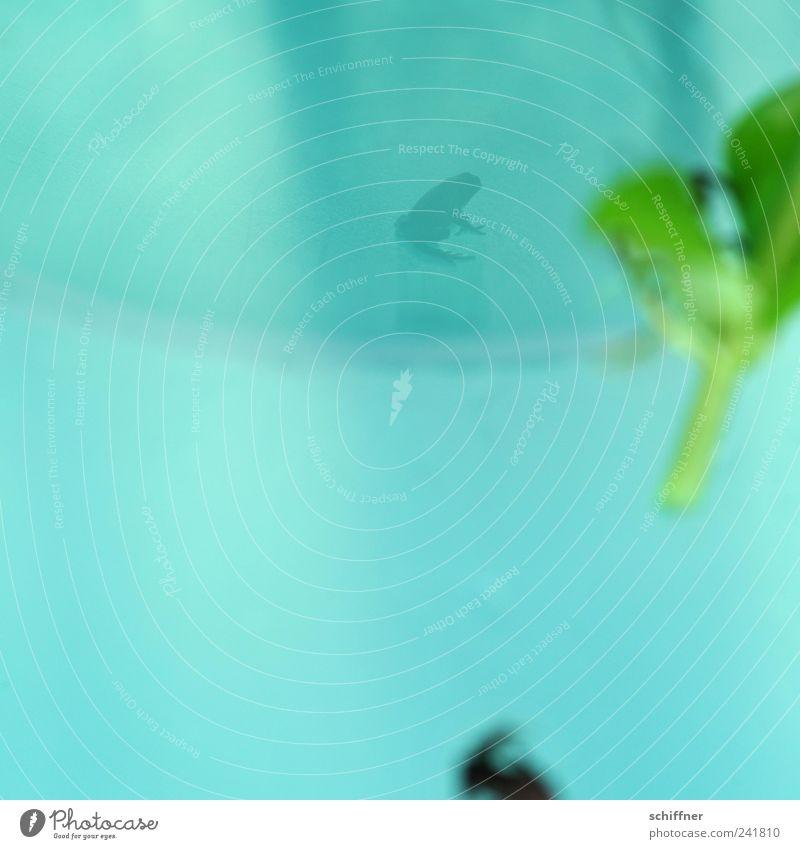 ein Schatten seiner selbst... Tier Frosch 1 Tierjunges klein winzig grün türkis Reflexion & Spiegelung Wasseroberfläche Spiegelbild Grünpflanze Wasserpflanze