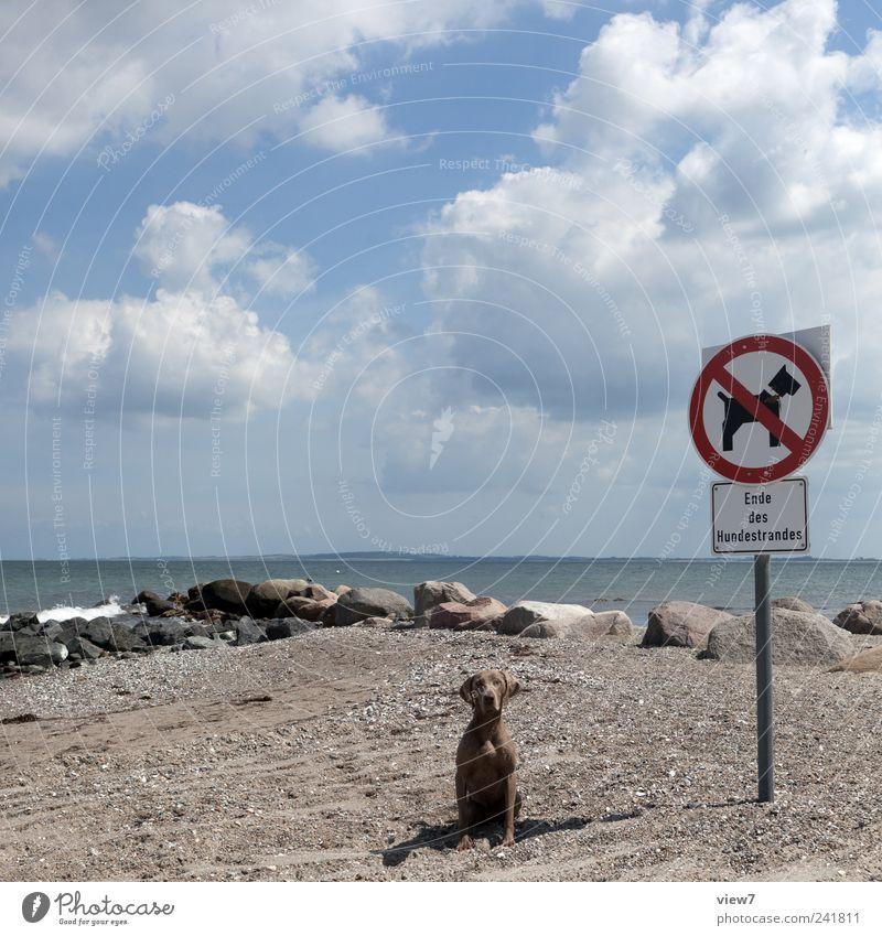 Hunde verboten! Himmel Natur Sommer Ferien & Urlaub & Reisen Strand Wolken Tier Ferne grau Stein Küste Schilder & Markierungen Schriftzeichen authentisch