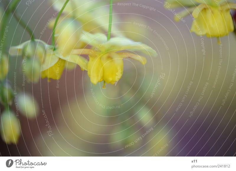Wie im Märchen Natur grün schön Pflanze Blume gelb Umwelt Garten Blüte Stimmung Park gold elegant Romantik fantastisch geheimnisvoll