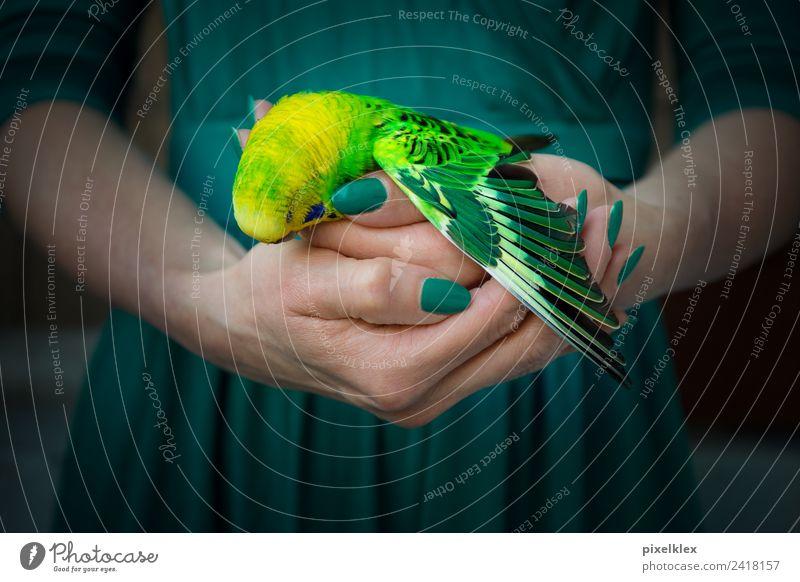 Ende Tier Haustier Wildtier Totes Tier Vogel Flügel Wellensittich berühren festhalten tragen dunkel klein Krankheit trist gelb grün Gefühle Stimmung Tierliebe