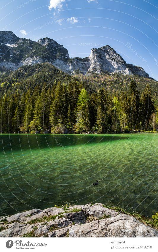 Deutschland Ferien & Urlaub & Reisen Tourismus Ausflug Abenteuer Sommer Sommerurlaub Berge u. Gebirge Natur Landschaft Himmel Schönes Wetter Wald Felsen Alpen
