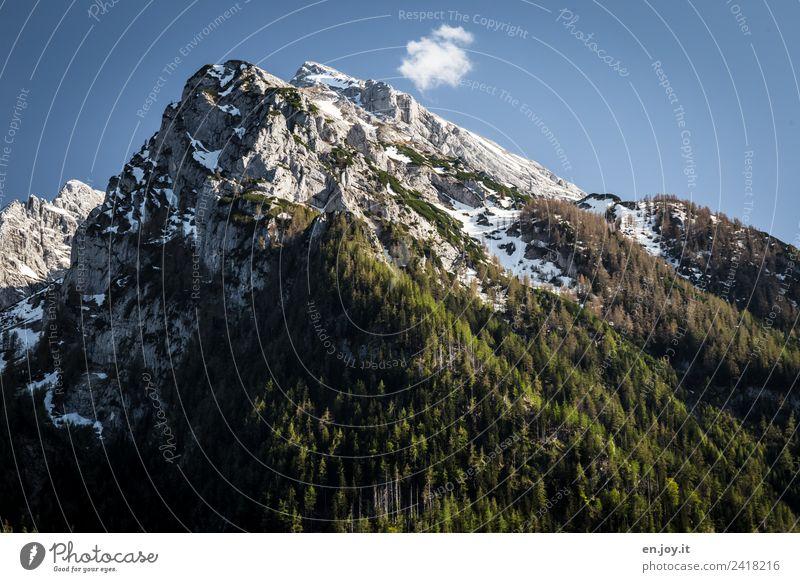 Baumgrenze Ferien & Urlaub & Reisen Ausflug Abenteuer Ferne Berge u. Gebirge wandern Natur Landschaft Himmel Schönes Wetter Wald Felsen Alpen Gipfel hoch Spitze
