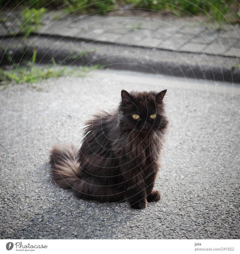 bekanntschaft Gras Straße Wege & Pfade Tier Haustier Katze 1 schaukeln sitzen Farbfoto Außenaufnahme Menschenleer Tag Tierporträt Blick nach vorn Herumtreiben